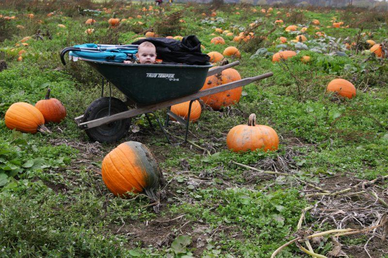 Steven-Pumpkin-1year-old (18)