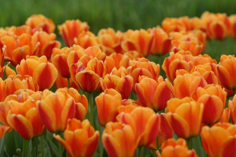 orange (38)
